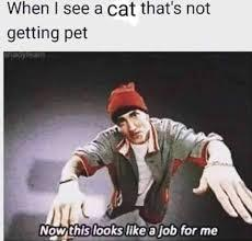 My only job in life other than make memes