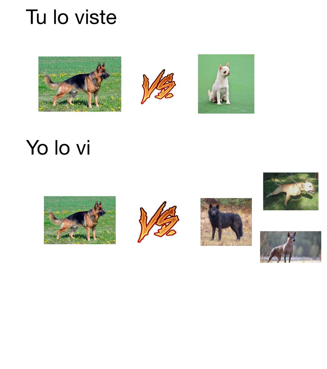 Es del partido mexico Alemania del mundial uno de los tres de abajo es el perro lobo mexicano o calupoh un cruce de lobo gris mexicano y xoloizcuintle y otro es el perro chamuco o pitbull mexicano - meme