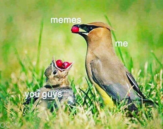 It's time - meme