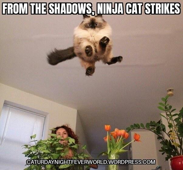Ninja cat strikes fear into others - meme