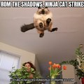 Ninja cat strikes fear into others