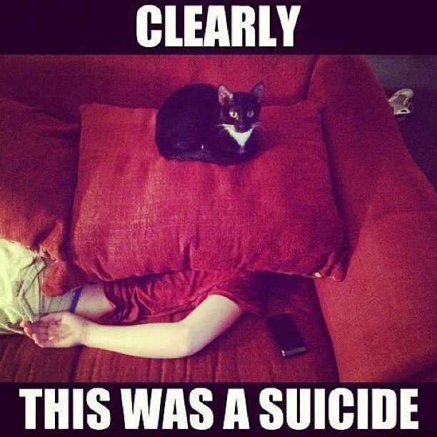 Did you know owning a cat increases suicide rate ? - meme