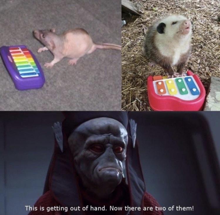 Neil and piano man possum team up - meme