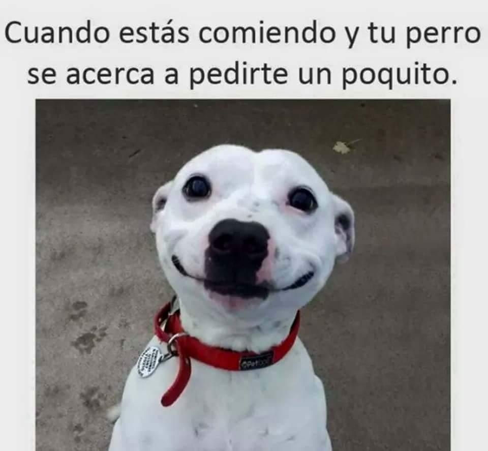 ¤ - meme