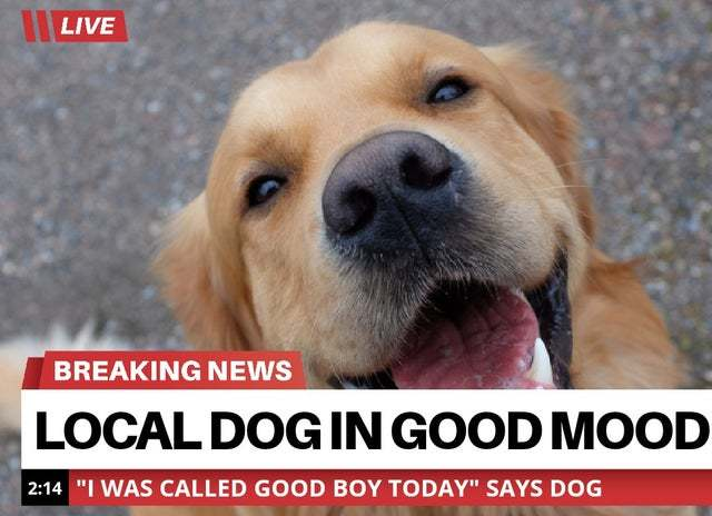 Local dog in good mood - meme