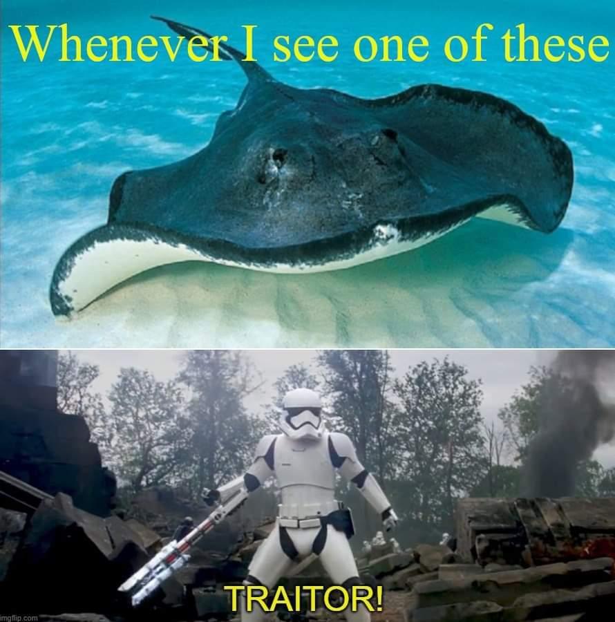 RIP Steve Irwin - meme
