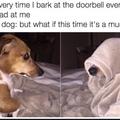 doggo is good boi