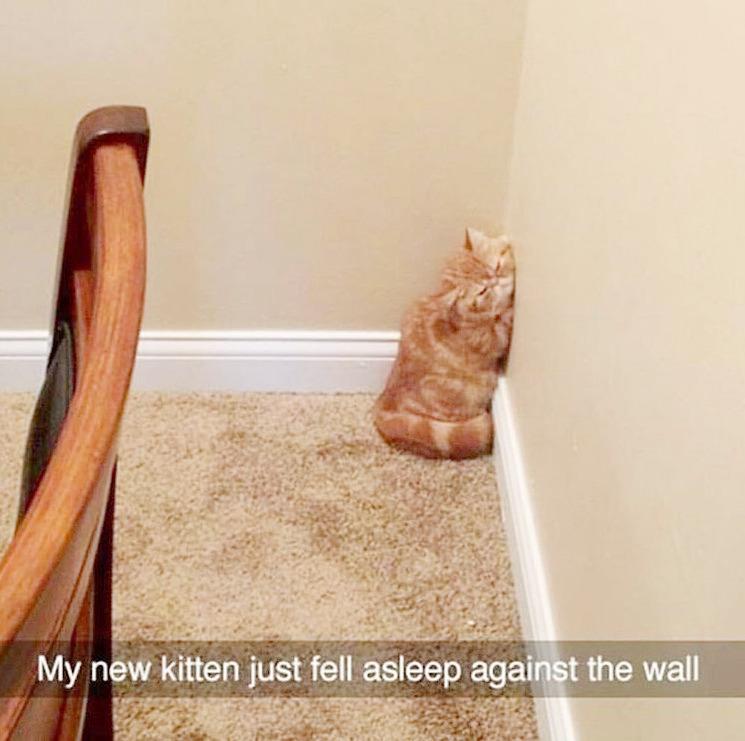 sweet wall - meme