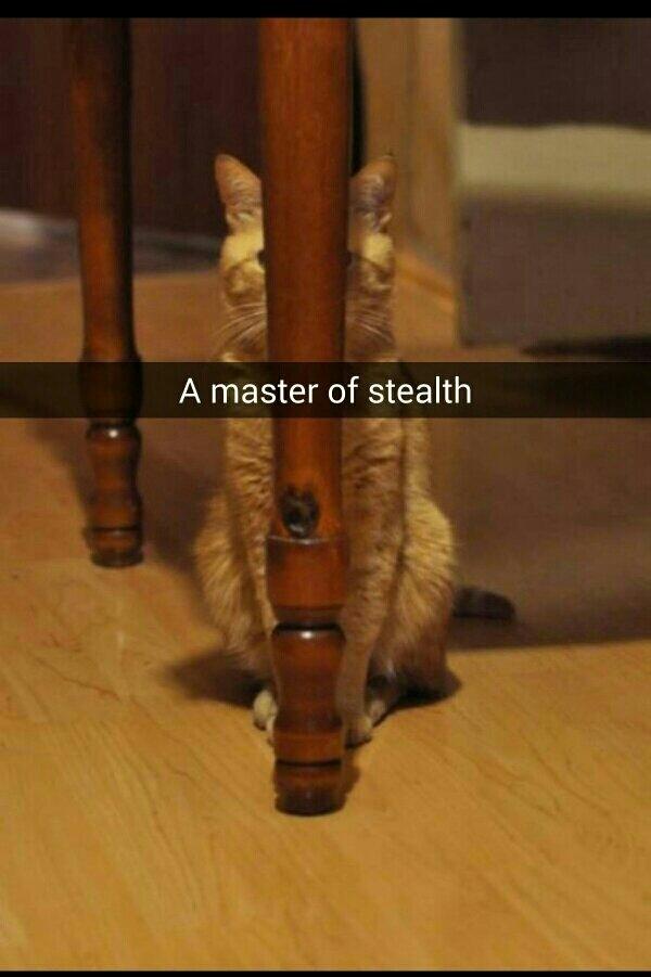I is hidings. - meme