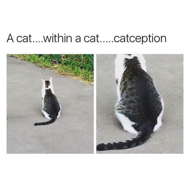 Catception - meme