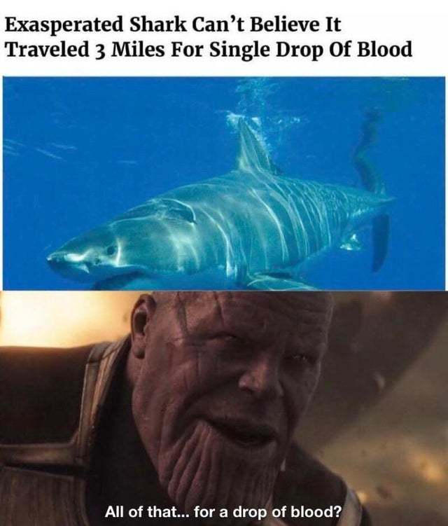 Exasperated shark can't believe it traveled 3 miles for single drop of blood - meme