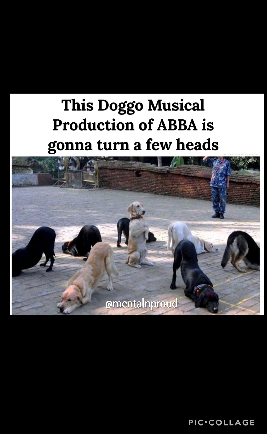 Abba Doggo - meme
