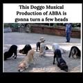 Abba Doggo