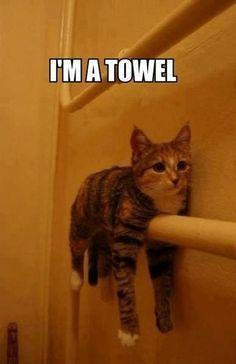 towel cat - meme
