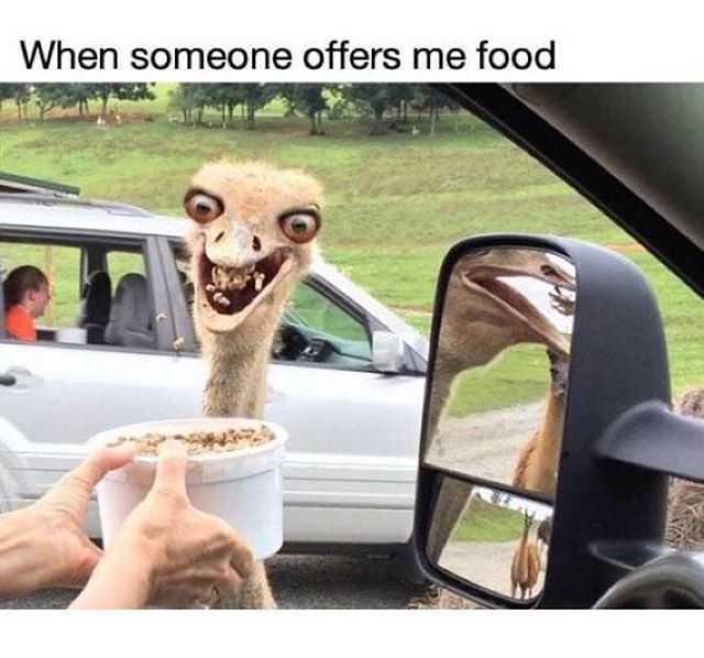 holy fuck - meme