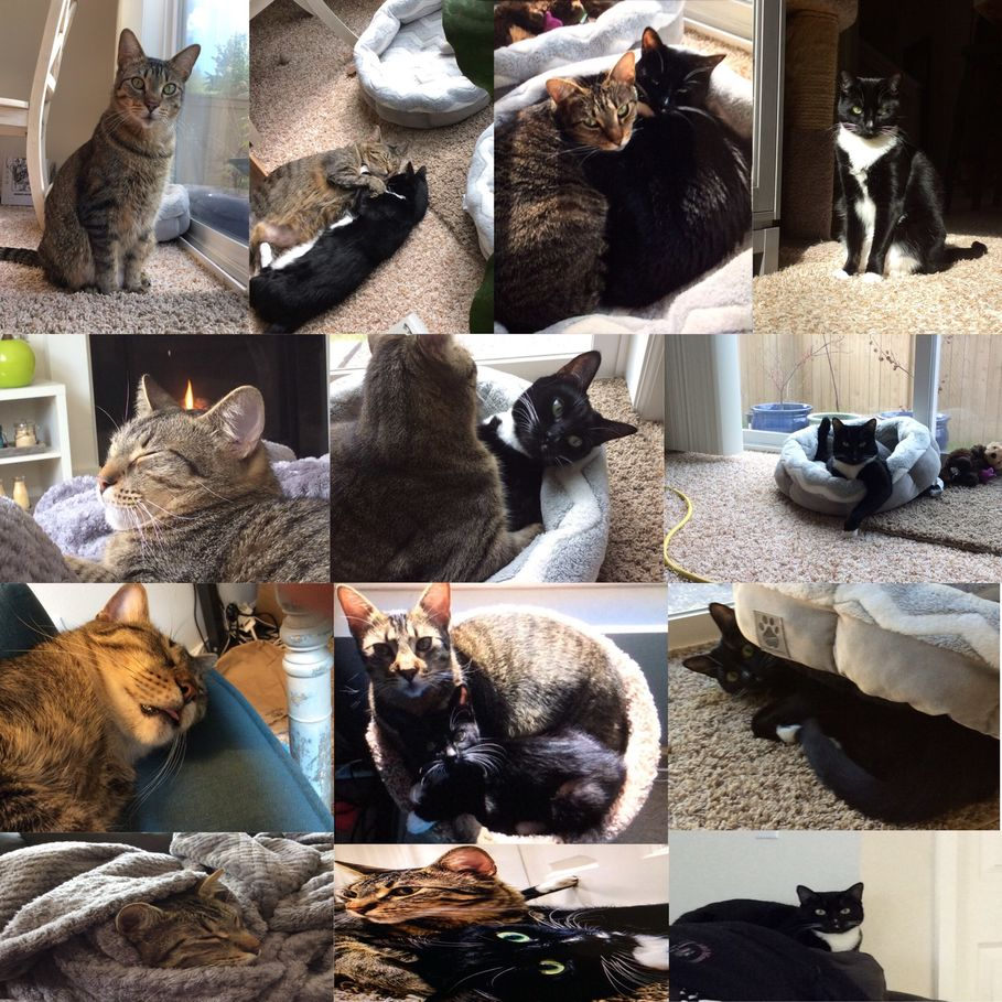 not a meme, just some cute pics of my cats. black one is smudge, tabby is martin.
