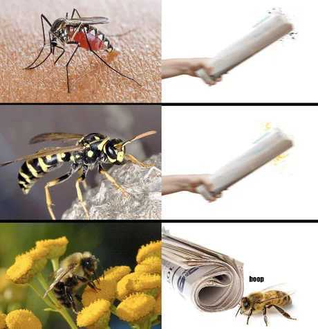 Wasps are actually good for gardens, they eat pests - meme