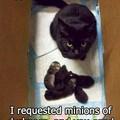 Fluffy jellybeans cats