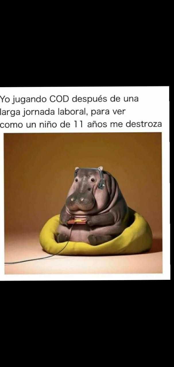 Ese hipopótamo es tierno - meme