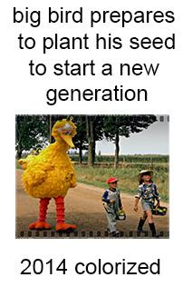 big bird strikes again - meme