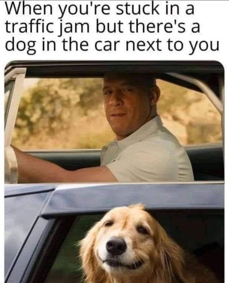 cute doggo - meme