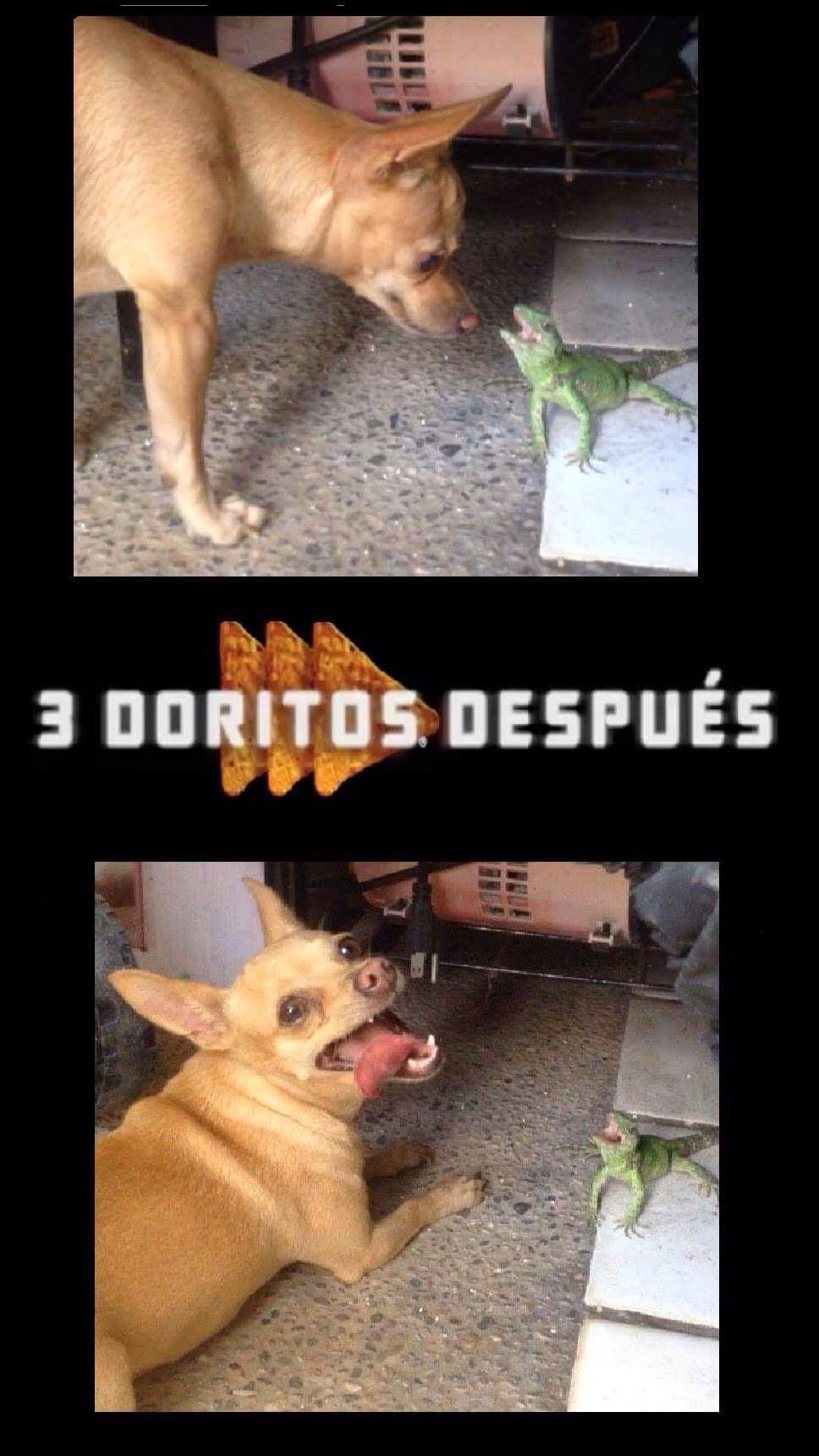 Sobreexploten a mi perro :v - meme