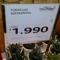 Las plantas tambien son suculentas