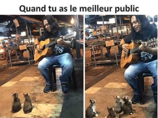 Les chats vont conquérir le monde - meme