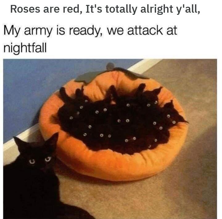 Evil Kitten Imgflip