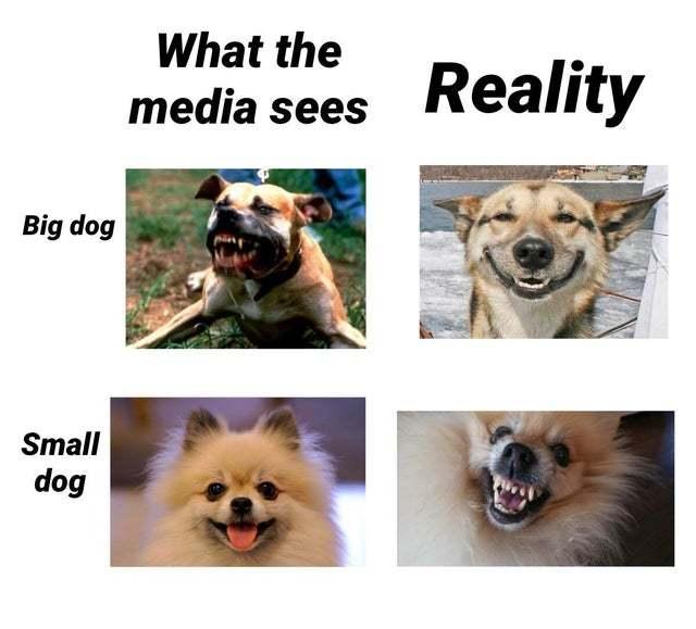 Big vs small dogs - meme