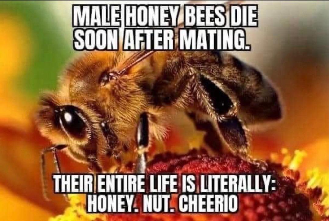 so long honey - meme