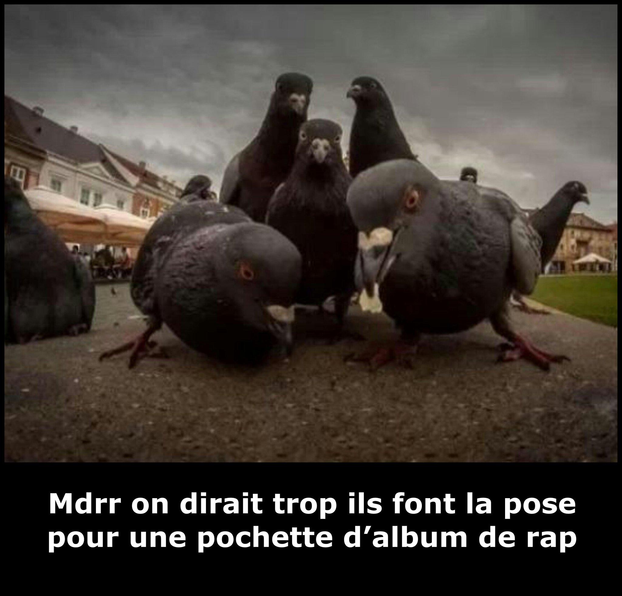 Fuck negers, I'm a pigeon bitch! - meme