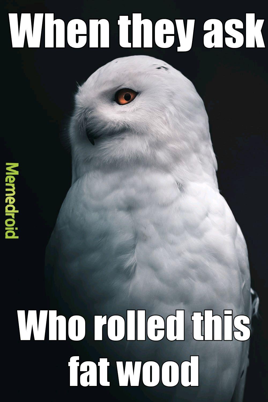 Smoking Owl - meme