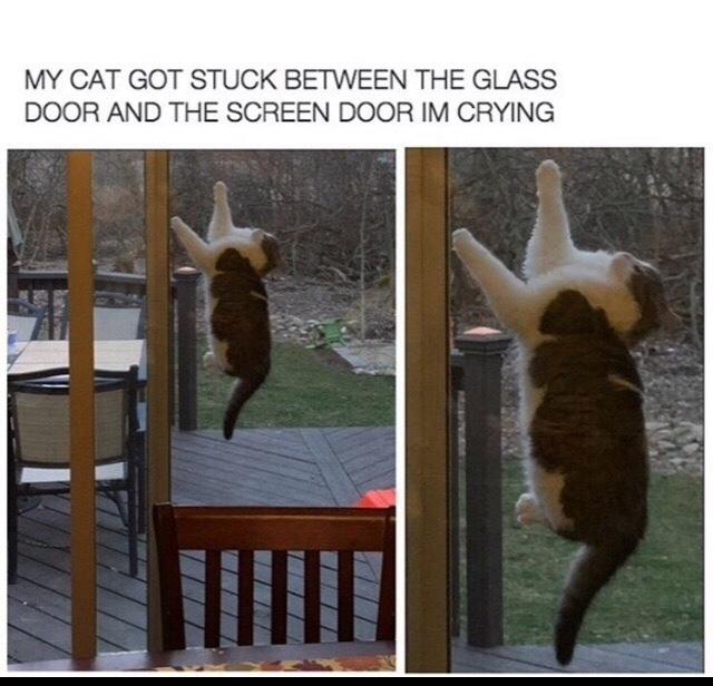 POOR CAT - meme