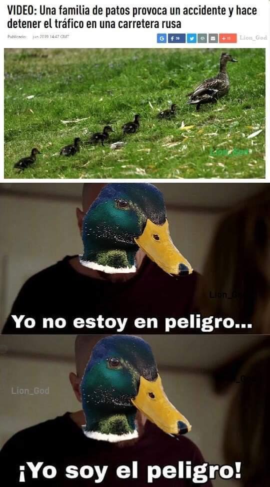 Patos peligrosos - meme