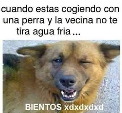 BIENTOS xdxdxdxd - meme