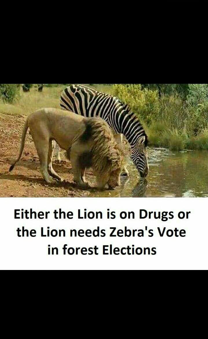 Zebra's vote - meme