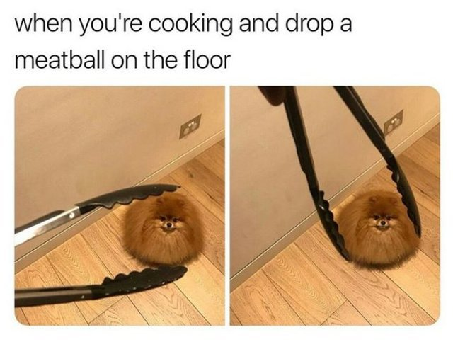 When you are cooking and drop a meatball on the floor - meme