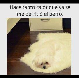 Ayuden a mi perrito plz - meme