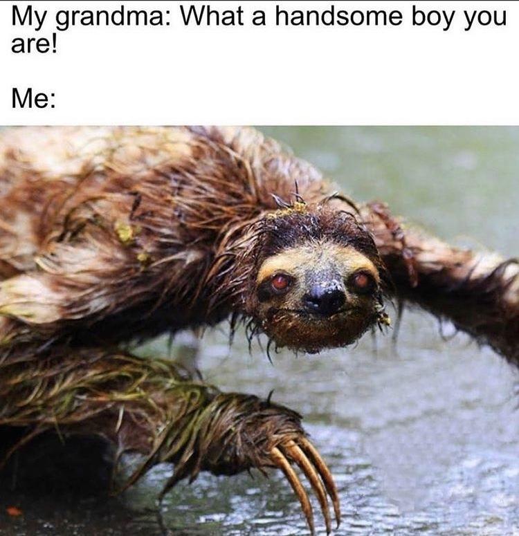 zombie sloth - meme
