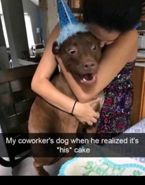 Happy birthday dog - meme