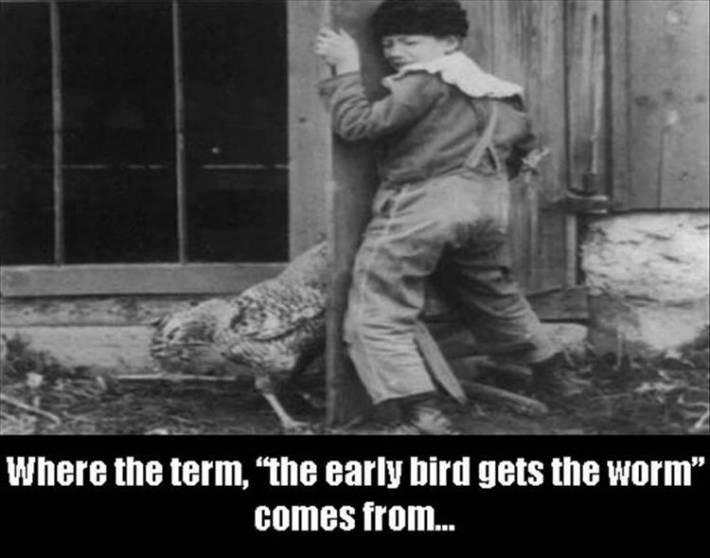 Early Bird - meme