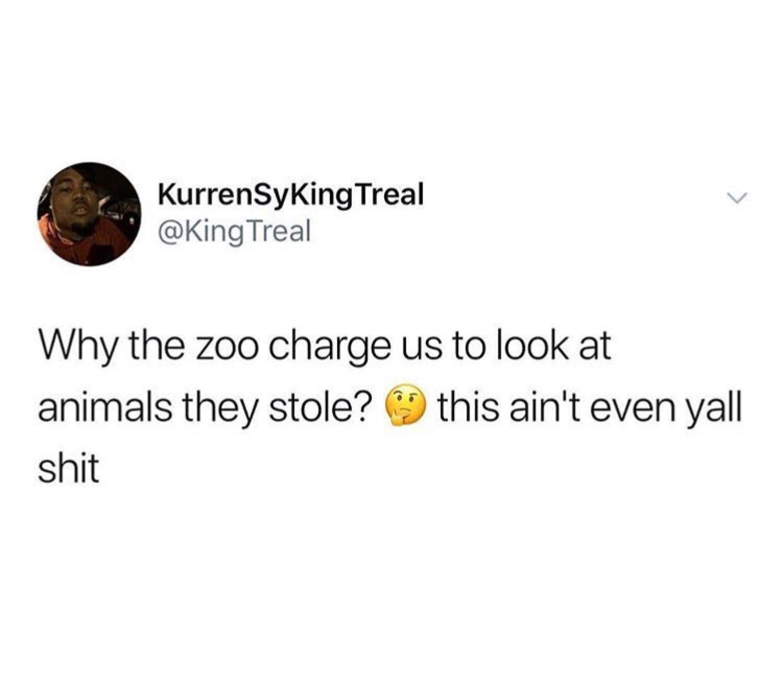 All animals be sleeping too smh - meme