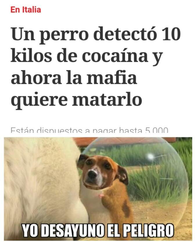 El perro es macho - meme