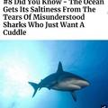 Poor shark