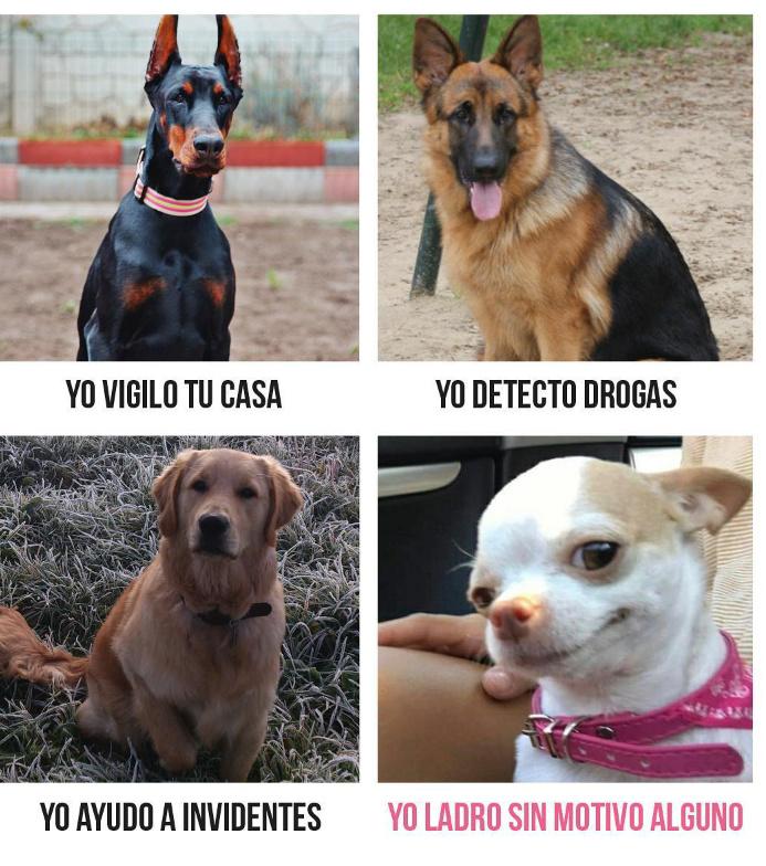 Tipos de perros - meme