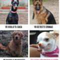Tipos de perros