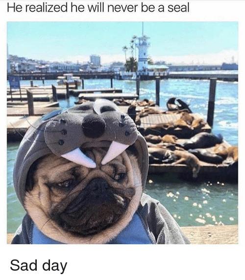 poor puggo - meme
