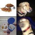 Mi perro se como la basura
