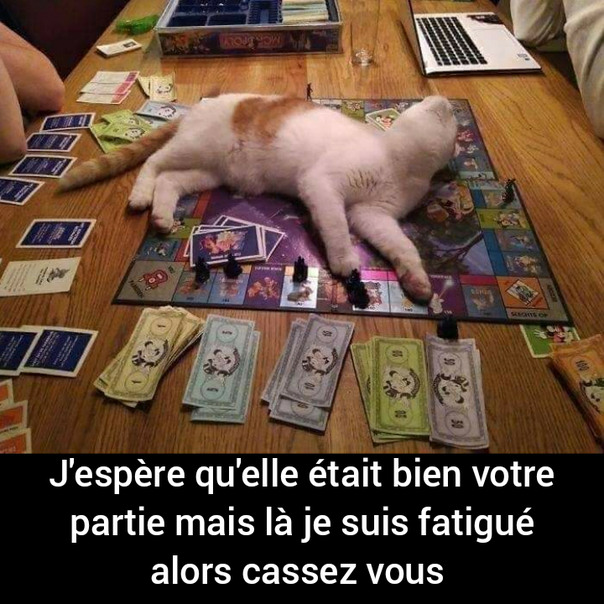 Putain de chat - meme